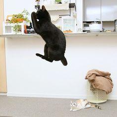 Ninja cat :))