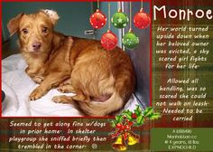 MONROE – A1098490 Very poor seized dog, owner evicted  on death list today! If you would like to foster or adopt and can't make it to the shelter, please write an email NOW to the Urgent Help Desk at Helpdogs@Urgentpodr.org Their experienced volunteers will assist you one-on-one with rescues and the application process. Transport can be arranged by rescues to the homes of approved fosters or adopters within 3-4 hours of New Yo