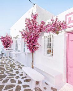 📍 Paros, Greek Islands 🌸 Photo via Places To Travel, Places To Go, Beautiful Flowers, Beautiful Places, Paros Greece, Travel Aesthetic, Aesthetic Girl, Greece Travel, Greek Islands