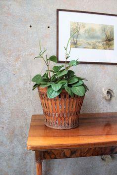 Wabi-sabi lubi rośliny i naturalne materiały, jak drewno i wiklina. #wabisabi #wabisabiwall #wabisabiplant #roślinnewabisabi #vintageplanter #wiklina