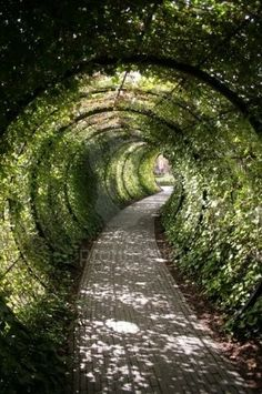 Garden tunnel, Alnwick Castle, Northumberland, England - A tunnel in the back yard! This would be fun! Be sure to check out the Poison Garden Alnwick Castle, Garden Paths, Garden Landscaping, Landscaping Ideas, Walkway Ideas, Garden Structures, Garden Trees, Patio Ideas, Garden Art