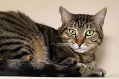 Update: Adopted :-) Aiko has been adopted from the Seattle Humane Society