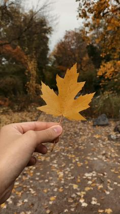 Leaf Photography, Aesthetic Photography Nature, Nature Aesthetic, Autumn Photography, Aesthetic Movies, Creative Photography, Beautiful Beach Pictures, Cool Pictures Of Nature, Beautiful Photos Of Nature