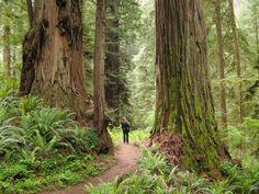 18. Jedediah Smith Redwoods State Park