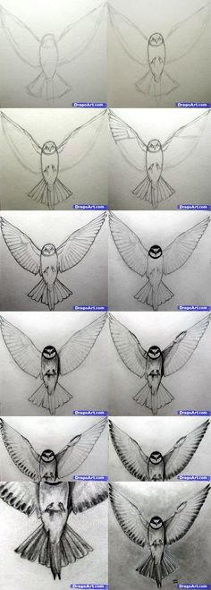 How to Draw A Realistic Bird by olga