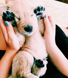 ★ on pin★ Animals And Pets, Baby Animals, Funny Animals, Cute Animals, Cute Puppies, Cute Dogs, Dogs And Puppies, Doggies, Crazy Dog Lady