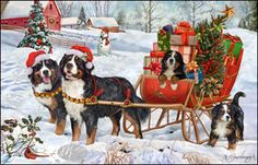 "Bernese Mountain Dog Christmas Holiday Cards are 8 1/2"" x 5 1/2"" and come in packages of 12 cards. One design per package. All designs include envelopes, your personal message, and choice of greeting. Select your greeting from the drop-down menu above.Add your personal message to the Comments box during checkout."