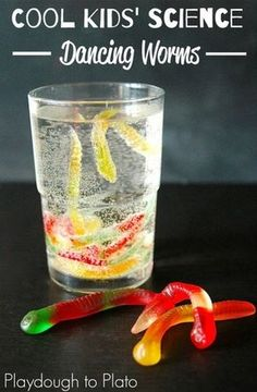 dancing gummy worms science for kids experiments