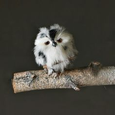 Tiny Owl, cute