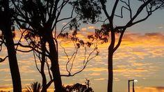 No Filter beautiful sunset through the trees in Costa Mesa California. #sunset #sunsets #colorfulsky #trees #travellocal #costamesa #costamesaca #california #ca #travelspiritually #thankyoujesus #adonai