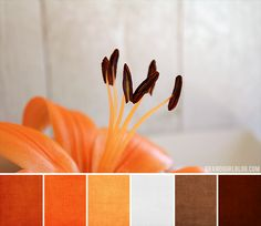 The orange interior color palette bodes well with yellow, and red tones, as well as browns and cream hues.