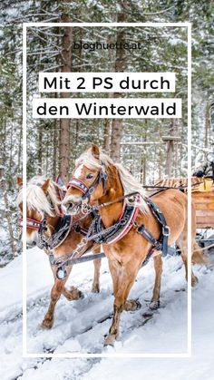 Horses, Activities, Animals, Winter Scenery, Sled, Ceilings, Woodland Forest, Animales, Animaux