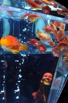 An Aquarium - Tokyo