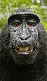 قرد يضحك Mysearch Funny Animals Animals Funny Animal Pictures