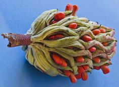 Magnolia Seed Pod | by alan_sailer