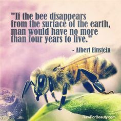 save the bees! do not support GMO, support your local organic farmers