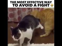 The Most Effective Way To Avoid A Fight - YouTube