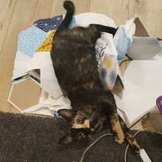 "Caught ""helping"" #tortico #catsofinstagram #cat #catstagram by prismaticpattern http://www.australiaunwrapped.com/"
