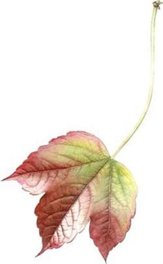 How to Paint Leaves in Watercolour