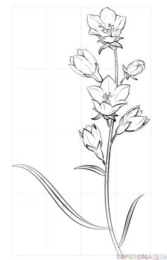 How to draw a bell flower step by step. Drawing tutorials for kids and beginners.