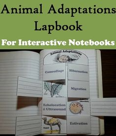 This lapbook on animal adaptations is a fun hands on activity for students to use in their interactive notebooks. Students may research different facts about each adaptation and write what they find on the provided blank lines.