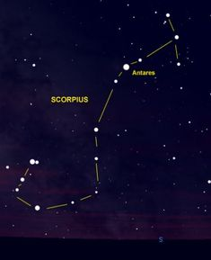 Scorpius is one of the few constellations that looks like its namesake.  The bright red star Antares marks the Scorpion's Heart.  Notice also the two stars at the tip of the Scorpion's Tail.  They are known as The Stinger.