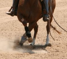 """I'm sure everyone has seen a reining horse spinning like a top and thought """"How did they teach them to do that?"""" Truthfully, the spin is really simple and easy to teach if you follow a few simple steps.    The spin is just a basic crossover step done multiple times. It's ama"""