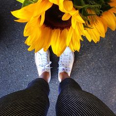 Sarsha Tights & sunflowers