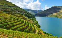 Why Portugal's majestic Douro Valley should be on your holiday wish list - via The Telegraph 03-09-2016 | A Unesco World Heritage site since 2001, the Douro is a majestic wilderness, one of the oldest demarcated wine regions in the world, but a surprisingly silent place, apart from three bustling weeks of harvest each autumn.