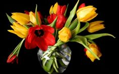 Animated Gif by Tieuyeu Tieuyeu Black Background Wallpaper, Black Backgrounds, Gifs, Online Image Editor, Red Tulips, Still Life Photography, Bud, Bouquet, Daughter
