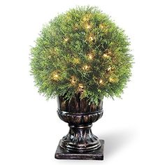 """cool  Measures 27"""" high with 15"""" diameter Pre-Lit with 70 UL listed, pre-strung clear lights Decorative urn base   https://www.silkyflowerstore.com/product/national-tree-lcy4-304-27-upright-juniper-ball-topiary-tree-in-a-decorative-urn-with-70-clear-lights-27-inch/"""