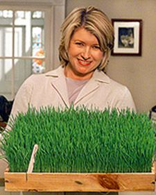 Growing grass for Easter