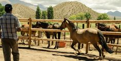 *Encuentro con caballos-Valle del Cielo*