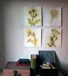DIY Wildflower Wall Art -- you could also easily do this with real flowers -- lightly spray paint a background color or base color for middle of flower, lay flower cluster down on top of canvas, lightly (like mist) spray paint over flower cluster,  remove cluster, paint detail  with quick brush strokes and voila! Would be awesome to use plants from your native state!