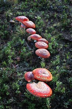 **All sizes | Red Mushrooms | Flickr - Photo Sharing!