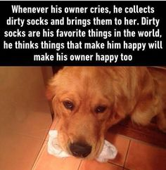 Chopin actually does this! I got my wisdom teeth removed 2 years ago and Chopin could tell I was in pain. By the end of the day he had brought me a pile of dirty socks on my bed because he thought it would make me feel better!  so thoughtful