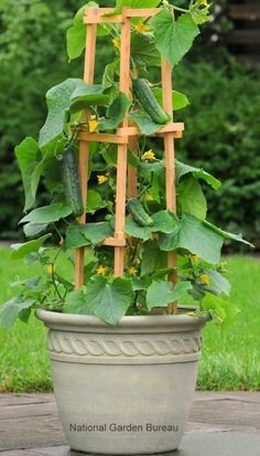 Tips for Growing Veggies in Containers; Window Boxes; Plant Supports; Which Containers to Use for Which Veggies