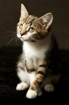 How to Spot the Signs of Cat Abuse Cute Kittens, Cute Kitten Gif, Cats And Kittens, Funny Cat Compilation, Funny Cat Videos, Pretty Cats, Beautiful Cats, Baby Animals, Softies