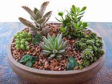 Características y cuidados de los cactus y crasas | Fronda - Magatzem Verd