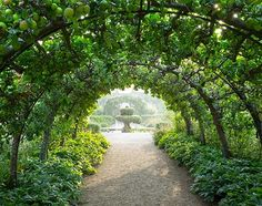 Simple iron hoops covered in espaliered apple trees lead to Prince Charles' completely organic kitchen garden.