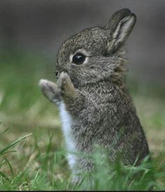 bunny.....sweet cottontail...
