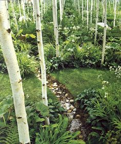 Birch woodland garden - reminds me of something out of Alice in Wonderland