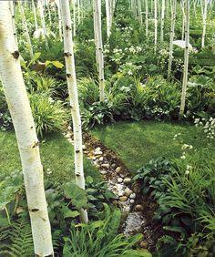 Birch woodland garden