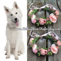 dog collar wedding dog collar girl dog collar flower pet collar dog