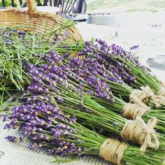 Harvesting the lavender Outside Plants, Herbal Teas, Coming Up Roses, Types Of Plants, Growing Plants, Flower Beds, Beautiful Life, Gardening Tips, Mauve