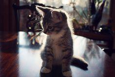 lindsayhuffman:  daily dose of cuteness. :) ..and amazing light.  (via criticallyashamed)