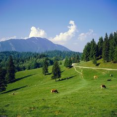 size: Photographic Print: Apline Pastures on the Edge of the Bucegi Mountains, Carpathian Mountains, Transylvania, Romania by Christopher Rennie : Travel Transylvania Romania, Carpathian Mountains, Prince Charles, True Beauty, Wonderful Places, Find Art, Framed Artwork, Tourism, Backdrops