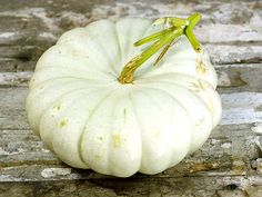 Flat White Boer Pumpkin: 105 days. Attractive, very flat, pure white pumpkins that are unique and tasty. Very firm and sweet orange flesh is perfect for pies and baking can grow up to 30lbs.