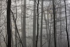 Foggy woods on Billy Goat Trail by the Potomac River in Maryland #1-francis-sullivan.artistwebsites.com