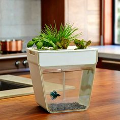 Oooh!! I want it!! Yes, I do!! A countertop hydroponics garden that cleans the fish tank by having the plants use the fish waste for food. Genius!!